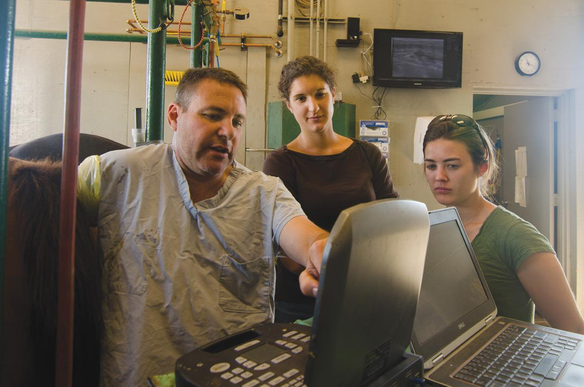 Professor Jason Bruemmer shows students Alida Ortiz and Leah Cashman images from the ultrasound he performs on a mare at the ERL. The ERL, which was destroyed in a fire on July 25, 2011, is currently being rebuilt. Photo: Nic Turiciano