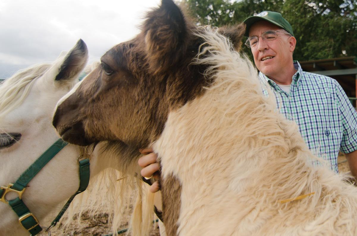 Charlie Cox, owner of Purnell's Irish Cobs, stands with his horses Roisin and Charlie at his property outside of Wellington, Colo. Cox was one of the 175 ERL clients who lost genetic material in the July 2011 fire. Photo: Nic Turiciano