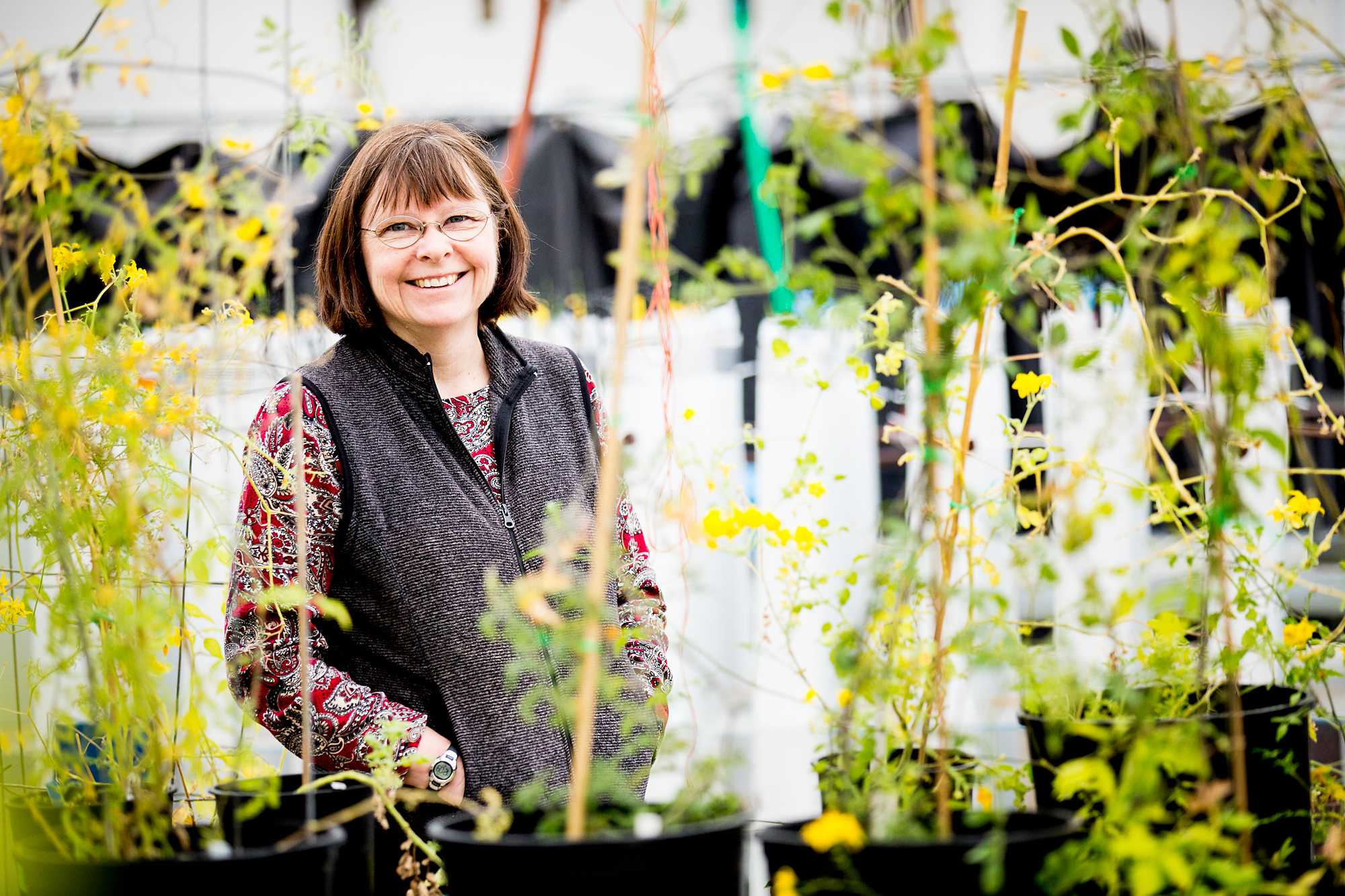 Evolutionary Biologist Patricia Bedinger stands in the Colorado State greenhouses surrounded by blooming wild tomatoes Thursday afternoon. Next March Bedinger will be traveling to Ecuador to work in the field and study Solanum Habrochaites, a type of tomato.