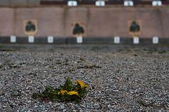 Shooting Range (Photo credit: macroman)