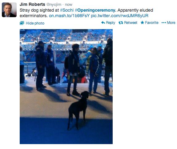 Opening Ceremony, Sochi, stray dog