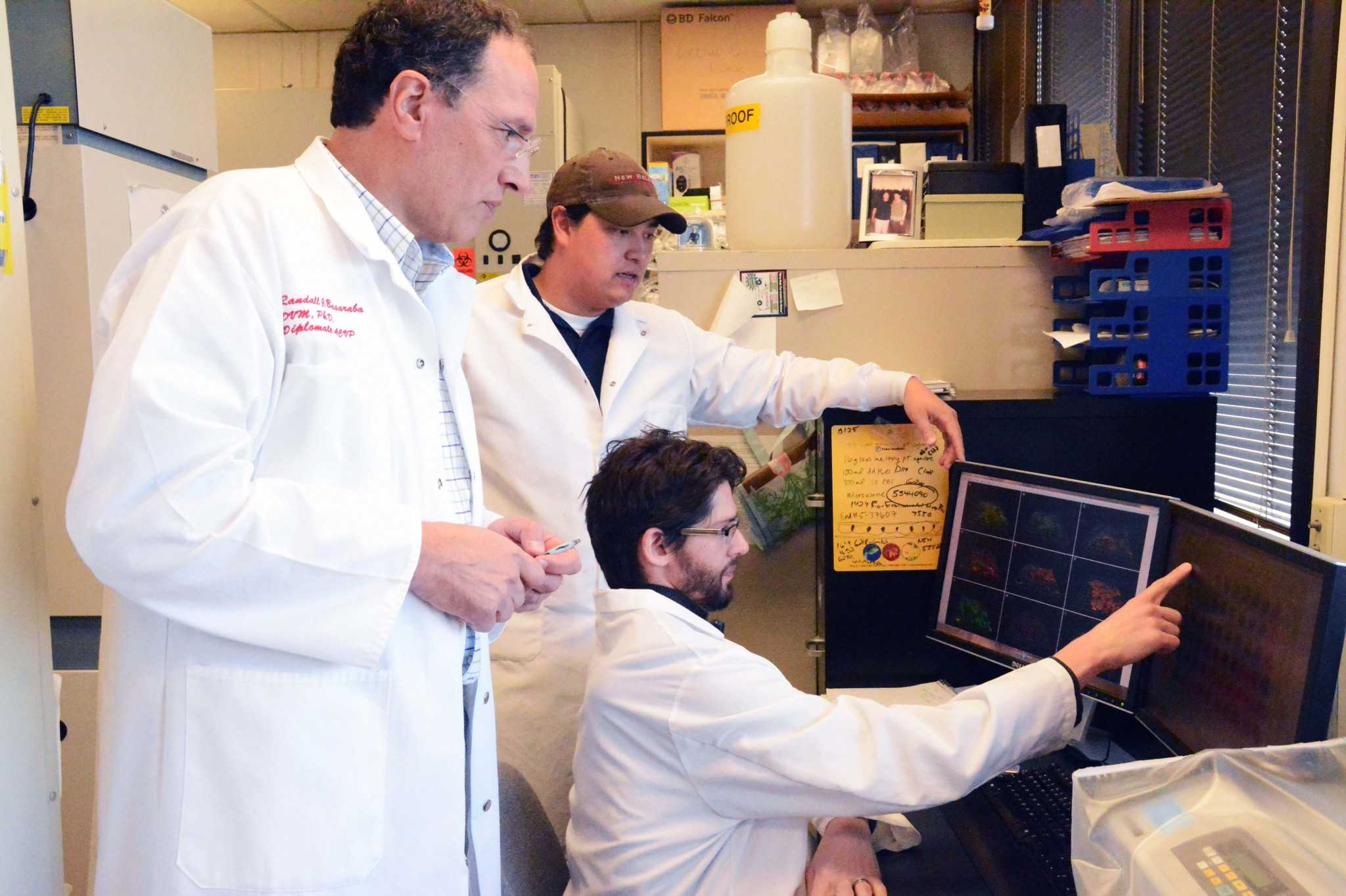 Dr. Randall Basaraba and research associate Forrest Ackart stand over Dr. Brendan Podell as the three examine different drug concentrations. The three researchers are working to find a more effective treatment for the tuberculosis bacteria.