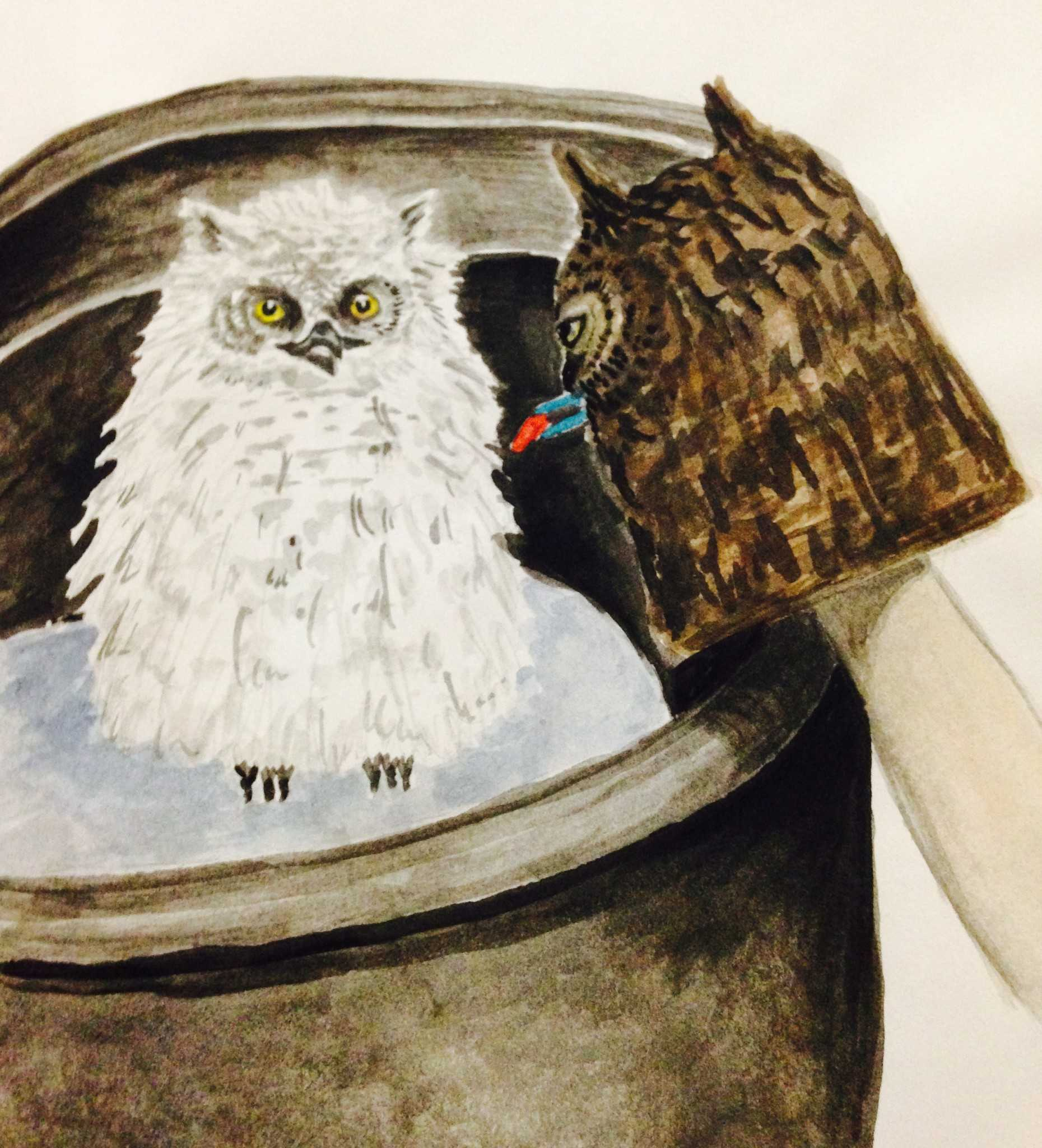 Watercolor sketch feeding a Great Horned Owlet with a puppet by Victoria Dixie Crowe. (2002)