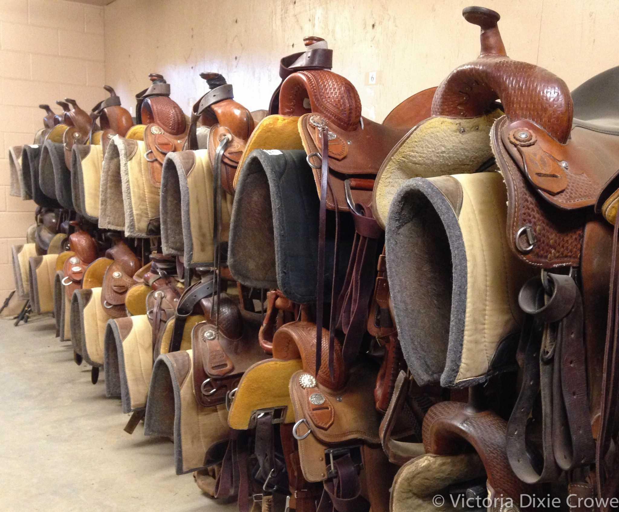 Equine Science Program's Western tack room. Photo credit Dixie Crowe