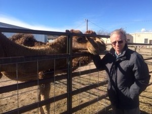 Richard Bowen greets a camel used for researching the MERS virus.