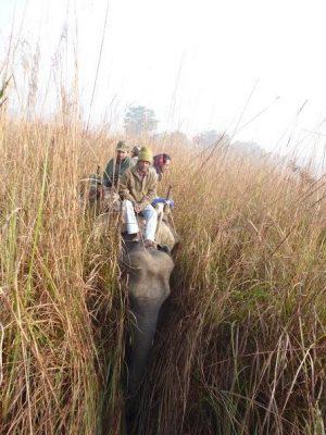 elephant in elephant grass (2)