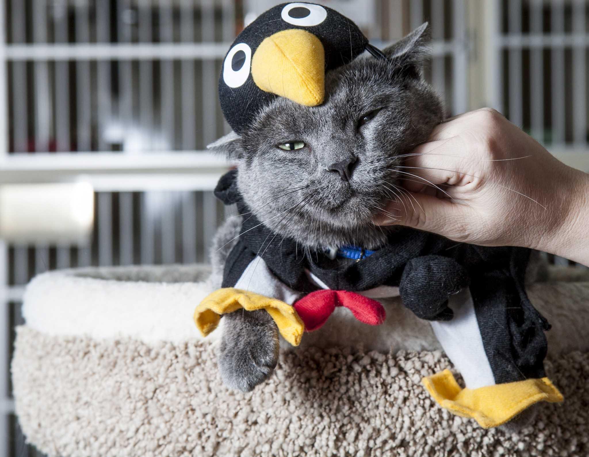 Cat Rescue Colorado Fort Collins
