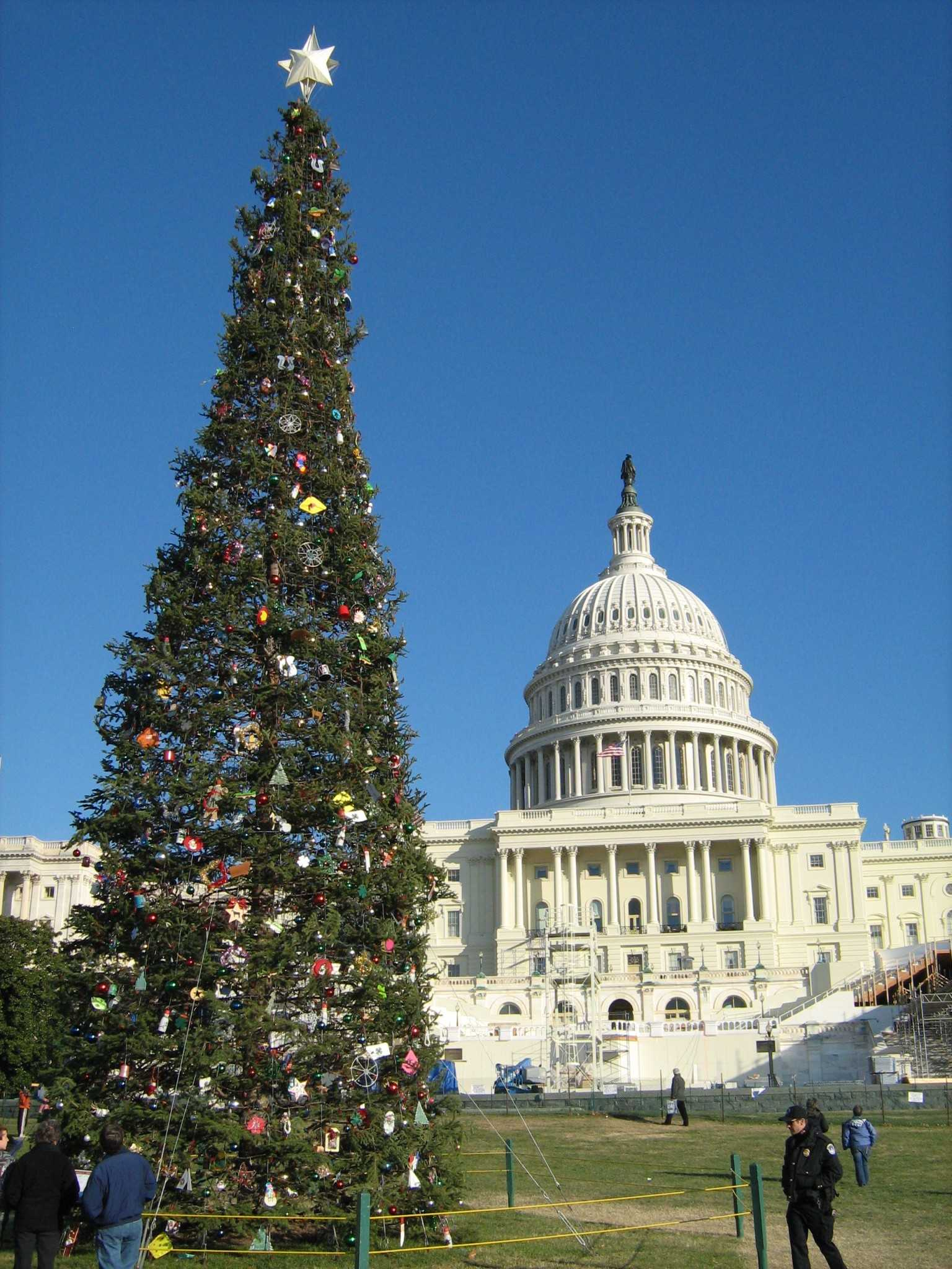 Capitol Christmas Tree.U S Capitol Christmas Trees Harvested In Colorado The