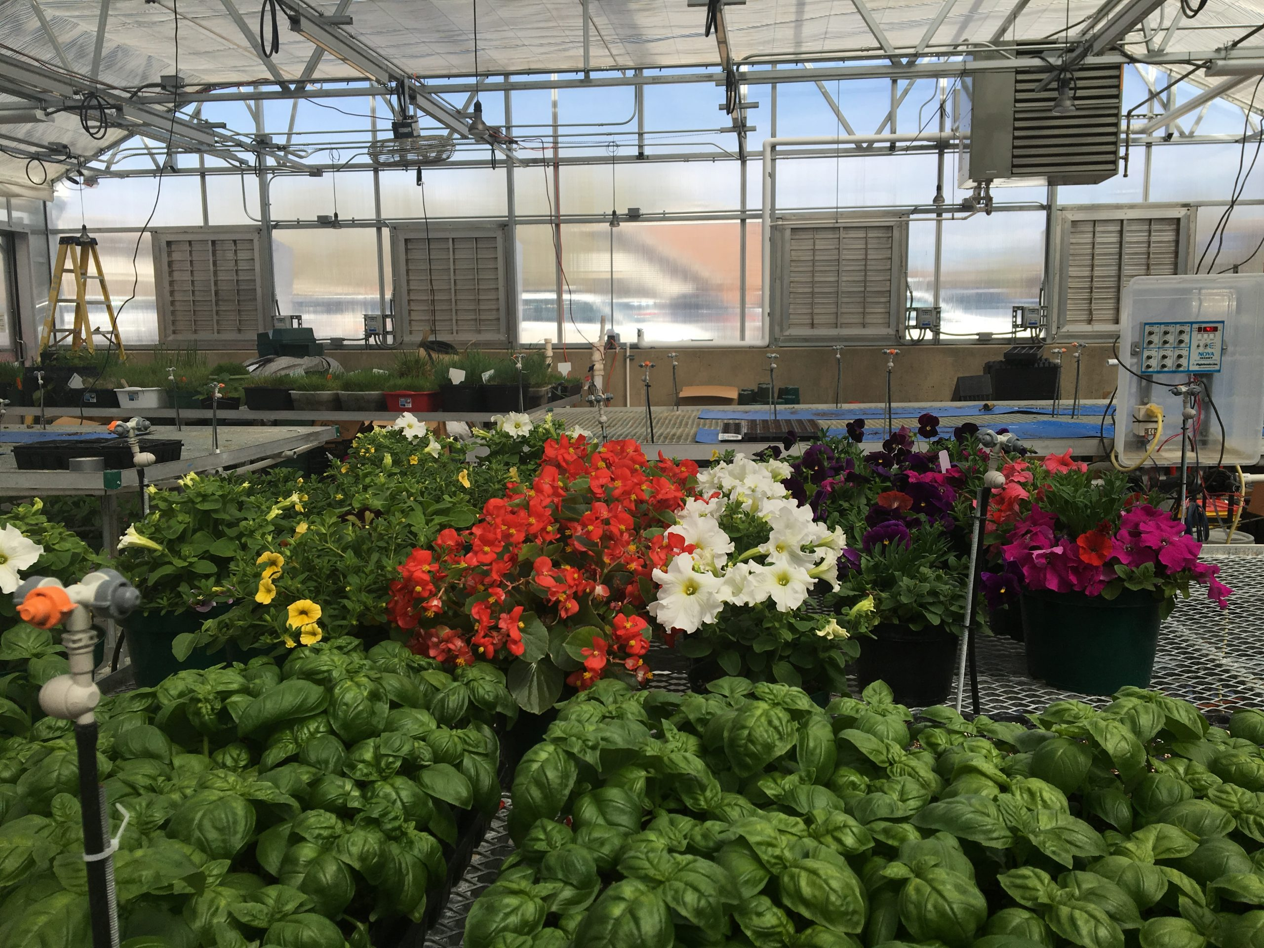 Horticulture Center Adds To Beauty And Health Of Fort Collins The Rocky Mountain Collegian