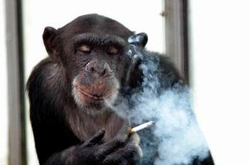 smoking monkey.jpg