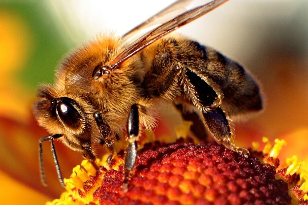 The buzz on the current state of bees