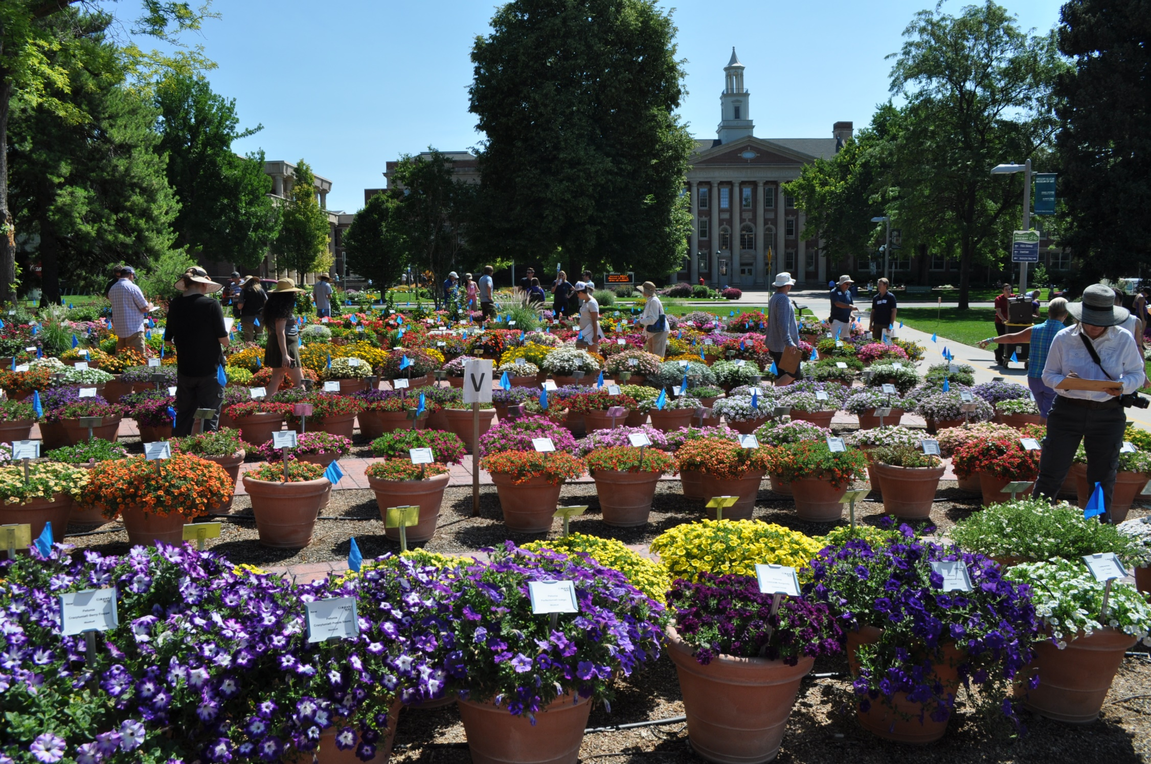 A display of plants being evaluated on Evaluation Day at the CSU annual flower trial garden